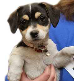 Might have to go and adopt this little one.