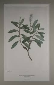 Captain Cook's first voyages and Banks'Florilegium - Google 検索 Banks, Book Art, Cook, Google, Home Decor, Interior Design, Home Interior Design, Cooking, Home Decoration