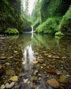 David Muench G-9160 - Eagle Creek, Punch Bowl Falls, Columbia River Gorge, OR