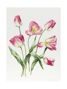 900 Flowers Ideas In 2021 Flowers Flower Art Flower Painting
