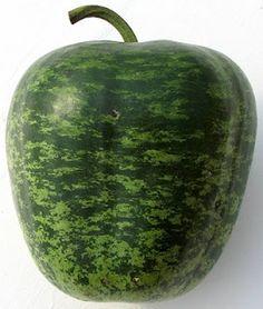 Hutchinson Farm: How to dry an apple gourd