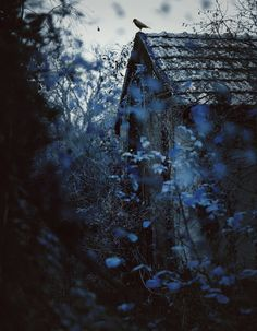 """""""Her mind wandered to that summer, long ago, when she fell in love in a little house behind a wall of blue flowers...."""""""