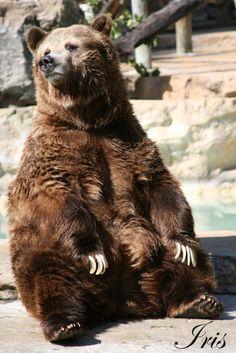 https://www.google.com/search?q=sitting bear