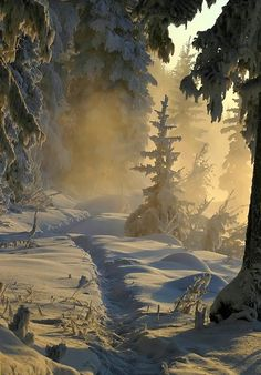 Winter Light- Norway