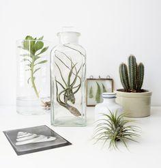 Urban Jungle Bloggers: Plants