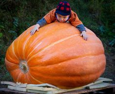 A child hugs a giant pumpkin at the pumpkin weighing in Fuerstenwalde, Germany on Sept. 30. The pumpkin has an estimated weight of about 1100 pounds. (Photo: Patrickâ Pleul / EPA)