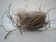 We found a little bird's nest outside our house the other evening, and it is such a beautiful piece of architecture - haphazard and inexact, yet utilitarian and intricate in it's woven tangle.
