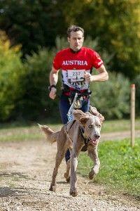 Canicross Dogs, Animals, Goal, Animais, Animales, Animaux, Pet Dogs, Doggies, Animal