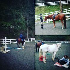 Back to da grind #horse #horses #horseoftheday #horsesofinstagram #instahorse #instagramhorse #instagramhorses #pet #pets #petoftheday #petsofinstagram #instapet #instagrampet #instagrampets #arab #arabcross #lippizan #hanovarian #horsebackriding #horseriding #equestrian #equestrianlife #horselessons