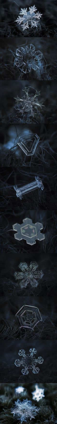 Snowflakes Under a Microscope