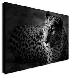 Resting Leopard by Animal Art Canvas Printers, Canvas Art Cheap Prints by www.canvastown.co.uk