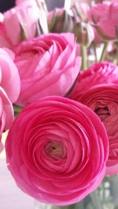 Ranunculus ✿⊱╮ beautiful amazing