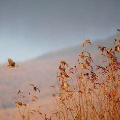 【yasu_hassy】さんのInstagramをピンしています。 《#photo#nature#nikon#写真好きな人と繋がりたい#写真撮ってる人と繋がりたい#japan#Lovers_Nippon#森#forest#landscape #sky  #mountain #mountains #naturelovers #景色 #自然 #bird #birds #東京カメラ部 #wild #wildlife #outdoors #nippon#sparrow #すずめ #雀 #野鳥 #夕方》