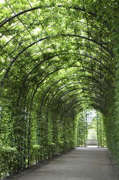 Grape arbor, this would be great with oranges too!