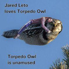 #jaredleto #owlmemes http://www.facebook.com/torpedoowl