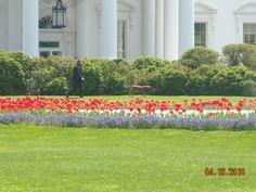 The White House. Washington, DC