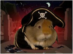 guinea pig outfits - Google Search