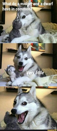 Funny animal pictures memes to make you laugh. Check this collection of latest animal pictures meme dump of the day Funny Shit, Funny Dog Jokes, Puns Jokes, Corny Jokes, Really Funny Memes, Stupid Funny Memes, Funny Relatable Memes, Dad Jokes, Puns Hilarious