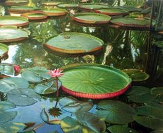 Giant Water Lily, Lily Pond, Patterns In Nature, Water Lilies, Pool Designs, Geometric Shapes, Art Boards, Arts And Crafts, Bloom
