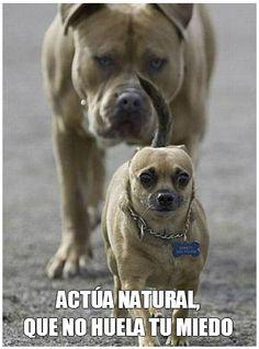 Si alguien se pone pesado, hazle como a los perritos bravucones: todos bajan las orejas si les hablas bonito. :3