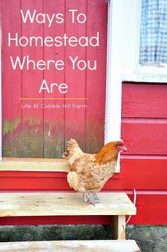 Life At Cobble Hill Farm: Ways To Begin Homesteading Where You Are