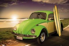Lime Green Beetle