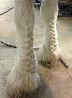 Akhal Teke, Andalusian, Appaloosa, Arabian, Cleveland Bay, Clydesdale, Criollo, Dutch Harness, Drum, Donkey, Friesian, Gypsy Vanner, Haflinger, Heavy Draft, Holstein, Hanoverian, Icelandic, Lipizzaner, Long Ear, Lusitano, Knabstrupper, Miniature, Mule, Mustang, Noriker, North Swedish, Norwegian Fjord, Paint, Quarter, Saddlebred, Shire, Standardbred, Tennessee Walking, Thoroughbred, Warmblood, Colt, Filly, Foal, Gelding, Equestrian, Horse, Mare, Pony, Stallion, Yearling, Bay, Black, Brindle…