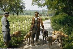 50 Vintage Photos Showing Life in Britain during the English Country Cottages, English Village, English Countryside, Life Is Like, What Is Life About, Mrs Marple, Greyhound Art, The Fox And The Hound, Country Life