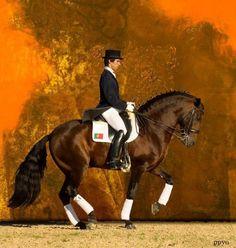 Votre race/robe de chevaux préférée