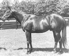 Bold Ruler (1954-1971) was sired by Nasrullah out of Miss Disco; Grandsire: Nearco; Damsire: Discovery. A fine racing record of 23 wins out of 33 starts (23-4-2) Bold Ruler was both the U.S. 3-Year-Old Champion and Horse of the Year in 1957. He was the U.S. Champion Sprint Horse in 1958 and the leading North American sire from 1963-1969 and again in 1973. Bold Ruler was inducted into the Hall of Fame in 1973.
