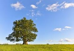 Link About It: Earth Day 2017 Edition: Some fascinating recent news about our beautiful planet Celtic Tree, Different Plants, Oak Tree, Earth Day, Natural Wonders, Botany, Evergreen, Perennials, Britain