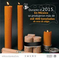 Durante el 2015 en México se produjeron más de mil 400 toneladas de cera de abeja. SAGARPA SAGARPAMX #MéxicoSiembraÉxito