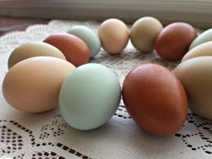 different-colored-chicken-eggs