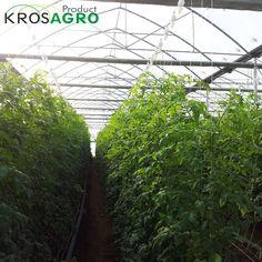 Tunele foliowe, ogrodowe i ogrodnicze www.krosagro.com
