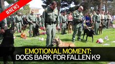 Watch the emotional moments dogs say goodbye to fallen K9
