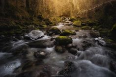 Forest Stream - A beautiful river in the heart of the Alpine forest. Hope you enjoy