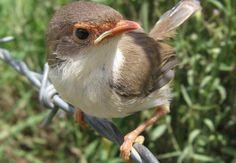 Types Of Birds   Types of Birds