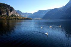Photo of the Day: Swans on the Lake Photography byTsung-Feng Yu (Tainan City, Taiwan);Hallstatt, Austria