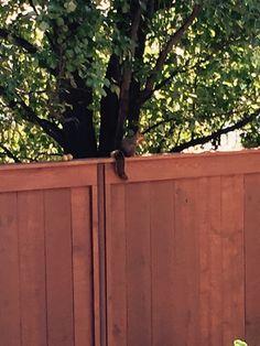 Back yard buddy