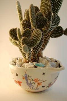 I heart cactus. Mini Cactus Garden, Cactus Flower, Types Of Succulents, Cacti And Succulents, Golden Garden, Plant Fungus, Horticulture, Pretty Flowers, Flower Power