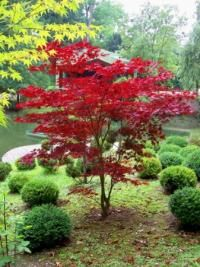 Japanese Garden Theme For A Getaway In Your Own Backyard Trees And Shrubs, Trees To Plant, Japanese Garden Design, Garden Shrubs, Garden Theme, Plantation, Front Yard Landscaping, Landscaping Trees, Dream Garden