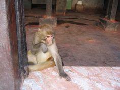 Yes, it's authentic marble! Monkey Temple, Katmandu, Nepal.