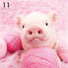Artlist Collection THE PIG PINK calendar