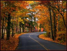 Fall road in Tennessee. There is nothing like driving thru the mountains from Knoxville to Sevierville and on up to the Smokey Mountains.  This is a great day trip to take your family or sweetheart and enjoy nature. Cades Cove is something to see also.