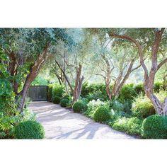 """206 Likes, 2 Comments - Garden Studio (@gardenstudiodesign) on Instagram: """"Pinning for this tree allee...... #inspiration #garden #treealley #gardendesign #landscapedesign…"""""""