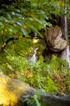 """somewhere deep in the forest..."" by Mark Bridger"