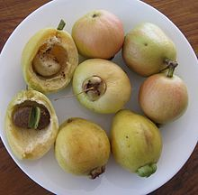 The edible fruit of Syzygium jambos is shaped like some kinds of guava, to which the plant is fairly closely related. In fact the fruit is so like the guava in appearance that people unfamiliar with it may mistake it for a guava on sight. However, the fragrance, flavour and texture are different [...]