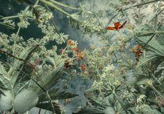 Tine Poppe se place au ras du sol pour photographier les herbes, fleurs et plantes avec un point de vue étonnant qui les transforme en jungle géante et luxuriante.