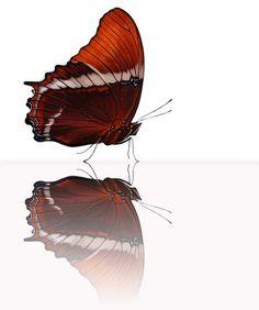 *• Butterfly on Glass •*  #butterfly #kelebek #fly #papillon #Schmetterling #mariposa #farfalla