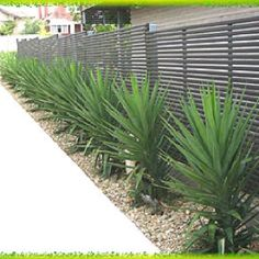 Garden Ideas – May have inherited a few Yucca 'Elephantipes'. Could be n… Garden Ideas – May have inherited a few Yucca 'Elephantipes'. Could be nice for screening in the backyard. Modern Landscaping, Front Yard Landscaping, Hedges Landscaping, Natural Landscaping, Landscaping Ideas, Back Gardens, Outdoor Gardens, Front Yard Gardens, Yucca Elephantipes